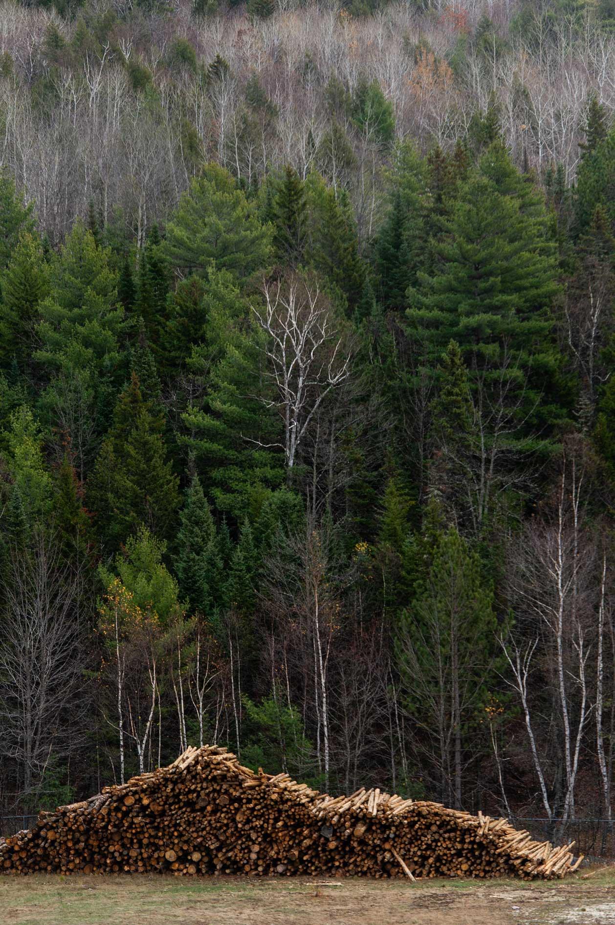 ReEnergy Stratton Biomass